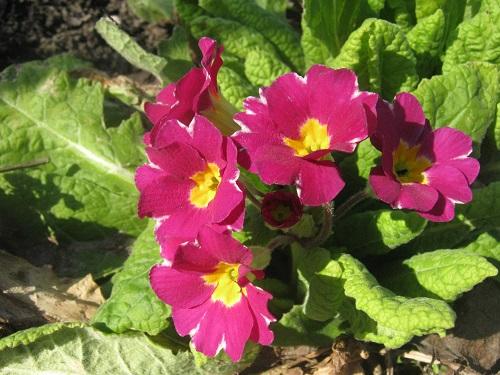 в цветнике в мае