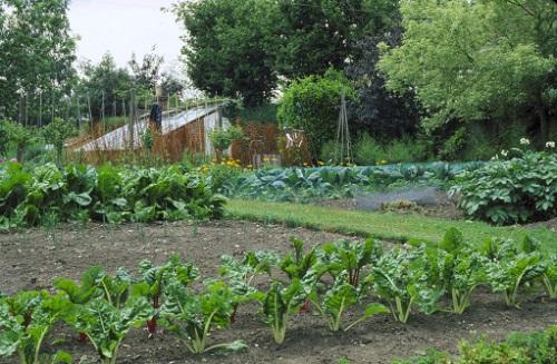 июль в огороде