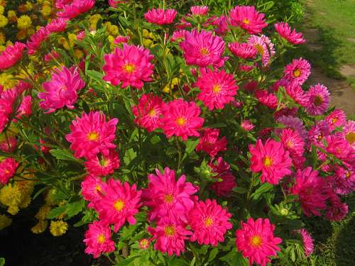 Цветы садовые в сентябре