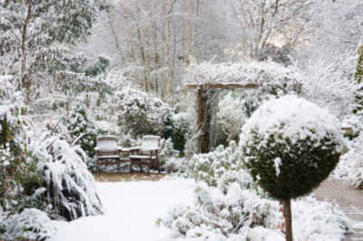 Winter in the garden