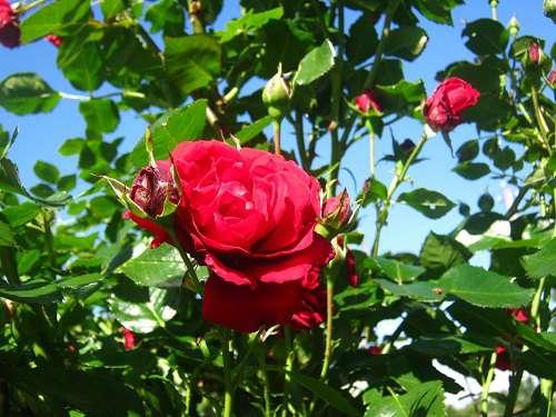 цветы в августе