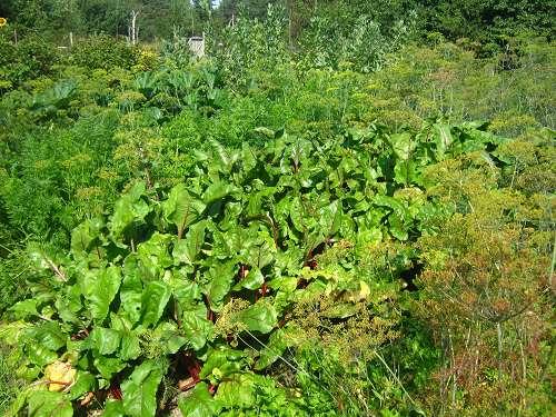 август в огороде